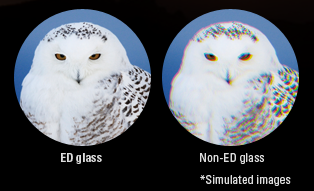 ed glass vs non ed glass