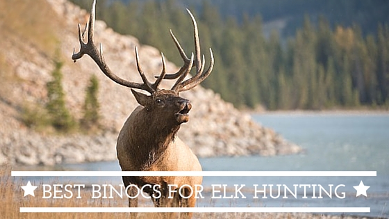 elk and deeur hunting
