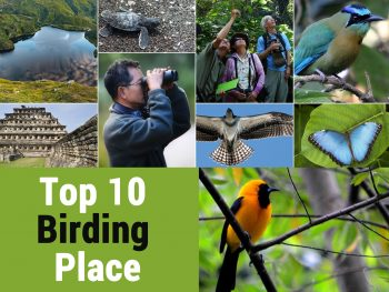 keyword Top 10 Best Places for birding